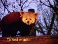 """""""Animal en fuite"""" est un court de Floriane Charles."""